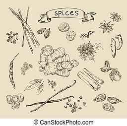 Vector background with hand drawn spices