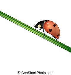 Vector background with realistic ladybug insect on white