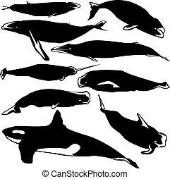 vector, ballenas, silueta