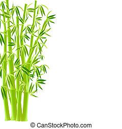 vector.  bamboo