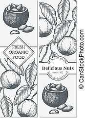 Vector banner set with hand drawn branch of of Brazil nuts.