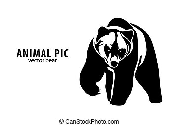 vector Bear - vector illustration of a bear on white...