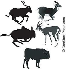 vector, beelden, van, antilopen