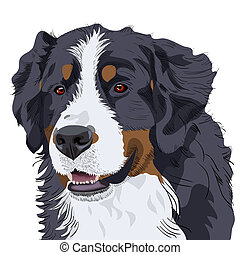 vector Bernese Mountain Dog breed - color sketch of a close-...