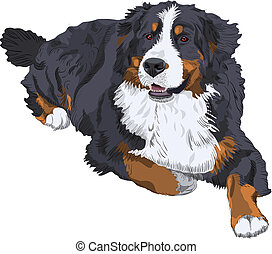 vector Bernese Mountain Dog breed - color sketch of a dog...