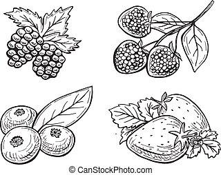 vector berries set