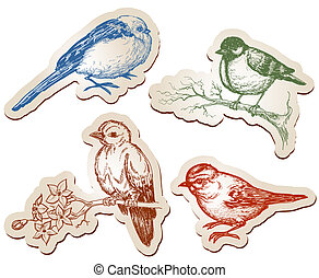 Vector birds collection