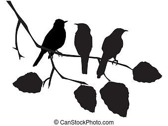 birds - vector birds on the branch