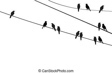 birds - vector birds on wire