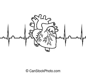 cardiogram - vector black and white heart and cardiogram on...