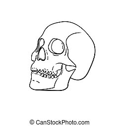Vector black and white skull isolated on background