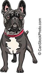 vector black dog French Bulldog