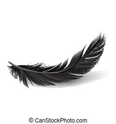 Vector.  Black Feathers on white background