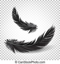 Vector. Black Feathers on white transparent background