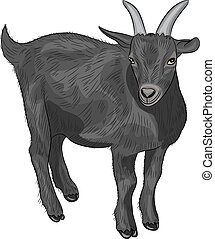 vector black goat