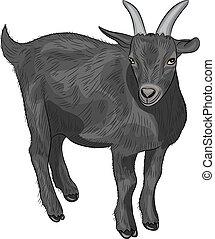 vector black goat