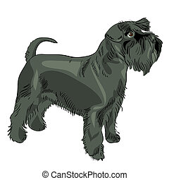 vector black Miniature Schnauzer dog - dog breed Miniature...