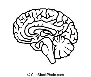 brain - vector black outline of the human brain on a white ...