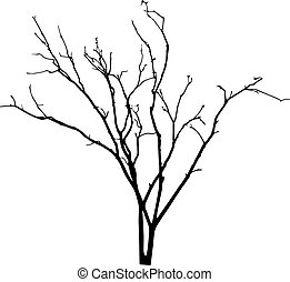 vector black silhouette of a bare tree