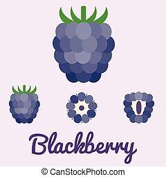 vector blackberry, flat design