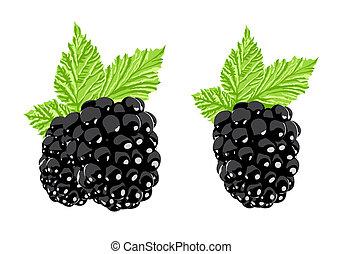 blackberry - Vector blackberry on white background