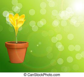 vector, bloem, illustratie, krokus