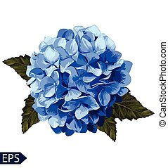 Vector blue realistic hydrangea, lavender. Illustration of flowers. Vintage. Can be used for gift wrapping paper. EPS