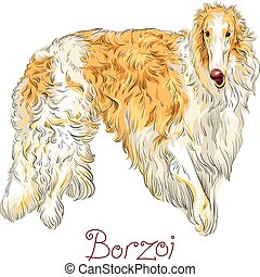 Vector Borzoi Dog breed