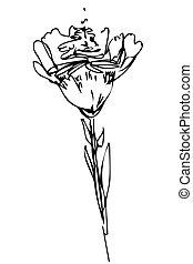 vector, bosquejo, brote flor, en, tallo