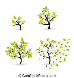 Vector botany concept cyclic growth of the tree. Environmental template development of wood from small to large, from spring to autumn. Eco style symbols set