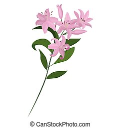 Vector bouquet. Light pink lilies. Vector set of flower elements. A colorful image.