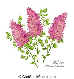 Vector branch of lilac