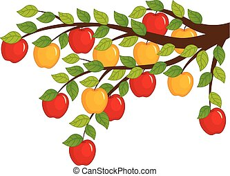Vector Branch with Apples