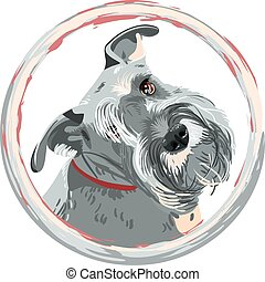 Dog breed bearded Miniature Schnauzer color of pepper and salt in the round frame. T-shirt Graphics. Dog print.