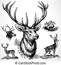 Vector Buck Deer - Detailed illustrations, easy to scale and...