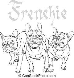 vector, bulldog, dog, franse , schets, ras, huiselijk