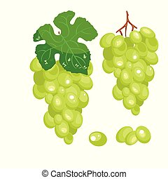 Vector bunch of green grapes on a white background.
