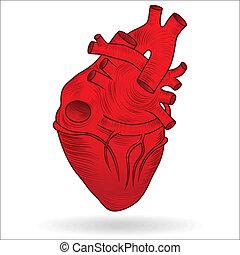 Vector button or icon of a human heart - Heart human body...