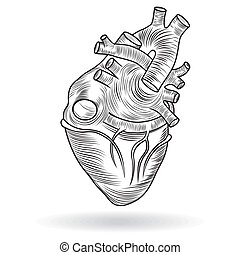 Vector button or icon of a human heart