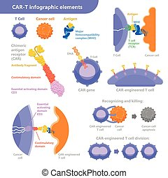 vector, célula, elementos, cáncer, plano, car-t, antígeno, ...
