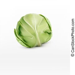vector cabbage, isolated on a white background