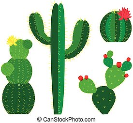 vector cactus colored