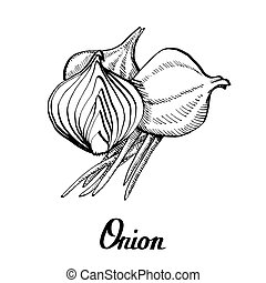 Vector calligraphy hand black and white onion - Vector ...