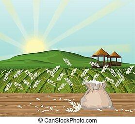 vector., campos, sol, fundo, arroz, paisagem
