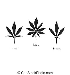 Vector cannabis leaves set
