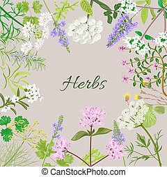 Vector card with herbal flowers. Salvia, angelica, oregano, rosemary, savory, verbena, anise, fennel, coltsfoot, marjoram flowers. Vector illustration.