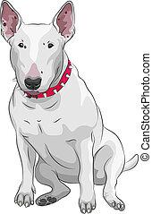 vector, caricatura, bull terrier, perro, casta, sittong