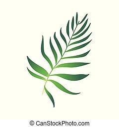 vector, caricatura, verde, helecho, planta, icono
