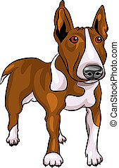 vector cartoon Bull Terrier Dog breed - color sketch of a...
