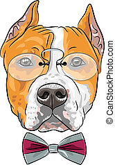hipster dog American Staffordshire